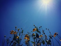 Sunny dayz Stock Photography
