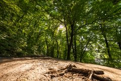 A sunny deciduous forest with. A small meadow Stock Images