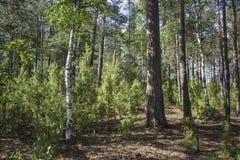 Sunny Dense Forest Images libres de droits