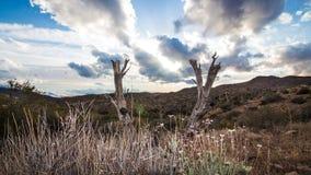 Sunny Desert Tree Stock Afbeeldingen