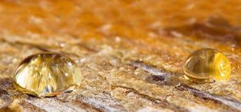 Sunny drops of honey Royalty Free Stock Photos