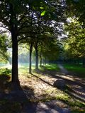 Sunny early morning in Prater park royalty free stock photo