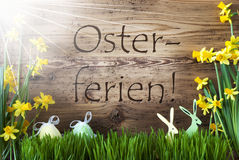 Sunny Egg And Bunny, Gras, Osterferien Means Easter Holidays Royalty Free Stock Photography