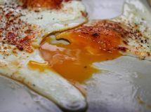 Sunny Egg Yolk Stock Foto