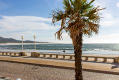 Sunny embankment with street lamps and palm tree. Beautiful seaside in town. Beautiful promenade along ocean coast. Seafront with trees and street lamps. Stone stock photography