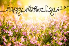 Sunny Erica Flower Field, Calligraphy Happy Mothers Day stock photo