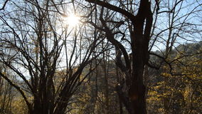 Sunny Evening in the Cold Forest stock video