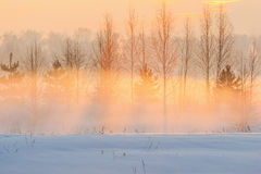 Sunny evening and the winter fog. Royalty Free Stock Image