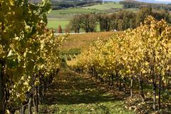 Sunny Fall Afternoon na região vinícola de Oregon Imagem de Stock