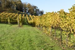 Sunny Fall Afternoon in Oregon Wine Country Royalty Free Stock Photos