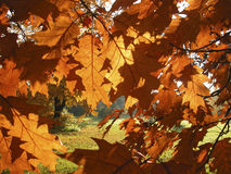 Sunny fall day. Wanderfull fall leafs colors. City park Royalty Free Stock Photo
