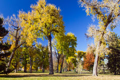 Sunny Fall Day in the Park Royalty Free Stock Photo