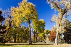 Sunny Fall Day in the Park. Bright sunny fall day in City Park - Denver, Colorado royalty free stock photo