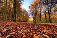 Sunny fall park with fallen leaves and road. In Slovenia. Golden and orange branches on trees. Close-up view on red fallen foliage on a ground Royalty Free Stock Photos
