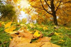 Sunny fall scene Royalty Free Stock Photos