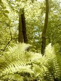 Sunny ferny forest in spring Stock Images