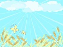 Sunny field Stock Photography
