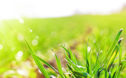 Sunny field Royalty Free Stock Images