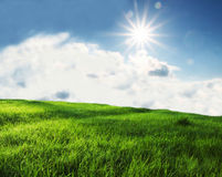 Sunny field Royalty Free Stock Photography