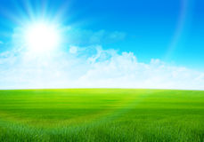 Sunny field. Beautiful panorama summer green field Stock Image