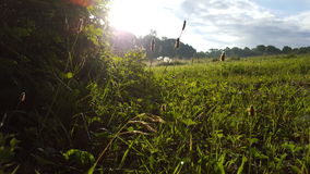 Sunny field. A beautiful view of a field in the early morning hours Royalty Free Stock Photos