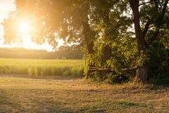 Sunny field. Big tree and sunny field Stock Photos