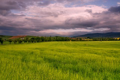 Sunny field with cloudy sky Stock Image