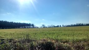 The sunny field. A green grassy field with a tree line and beautiful sky Royalty Free Stock Photo
