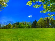 Sunny Field. A perfect green field surrounded by trees in bright sunlight Stock Image