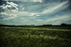 Sunny field Royalty Free Stock Photos