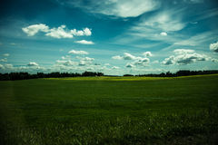 Sunny field stock photography