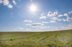 Sunny field Royalty Free Stock Image