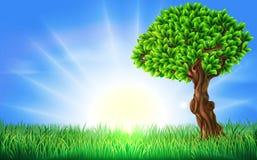 Sunny Field Tree Background Fotos de archivo libres de regalías