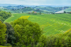Sunny fields of Tuscany Stock Image