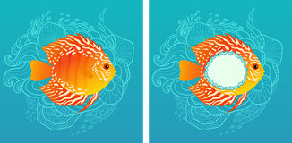 Sunny fish Royalty Free Stock Images