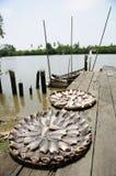 Sunny fish Royalty Free Stock Photography
