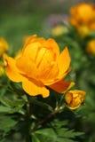 Sunny flower. Stock Photos