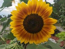 Sunny flower stock photo
