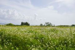 Sunny Flower Field Arkivfoton