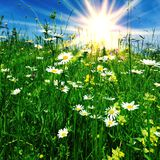 Sunny flower meadow. Bright sun on flower meadow Royalty Free Stock Image