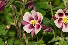 Sunny Flower Patch Royaltyfri Fotografi