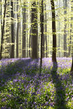Sunny flowering spring forest Stock Photography
