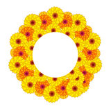 Sunny flowers. royalty free stock images