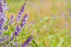 Sunny Flowers background Stock Image