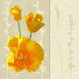 Sunny flowers Royalty Free Stock Photography