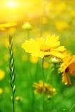 Sunny flowers field stock photos