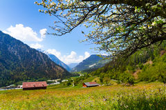 Sunny flowers field near Swiss mountains Stock Images
