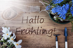 Sunny Flowers, Hallo Fruheling Means Hello Spring. German Text Hallo Fruheling Means Hello Spring. Sunny Spring Flowers Like Grape Hyacinth And Crocus. Gardening stock photo