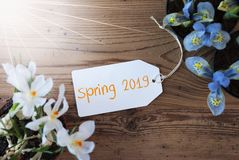 Sunny Flowers, Label, Text Spring 2019, Wooden Background royalty free stock photo