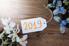 Sunny Flowers, label, texte 2019, fond en bois de Brown photo stock